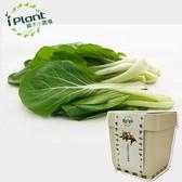iPlant 積木小農場 - 小白菜
