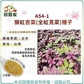 【綠藝家】A54-1.狠紅杏菜(全紅莧菜)種子5克(約7200顆)