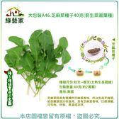 【綠藝家】大包裝A46.芝麻菜種子40克(箭生菜圓葉種)