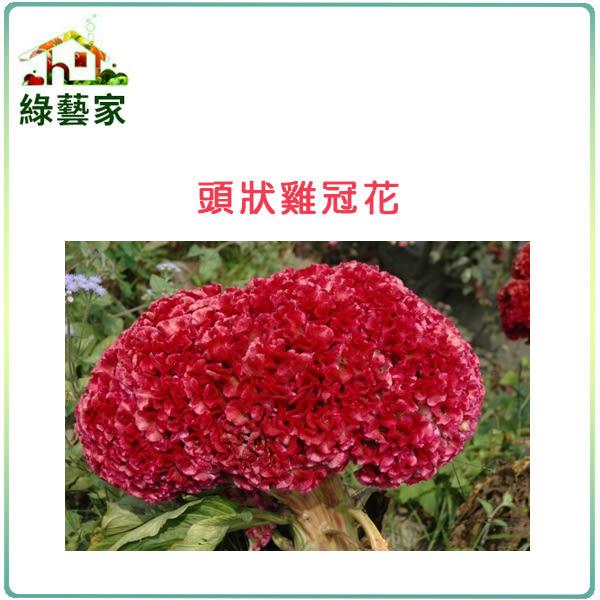 【綠藝家】H24.頭狀雞冠花(紅色,高40~60cm)種子35顆