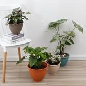 3個裝 加厚塑料花盆水培綠蘿專用盆陽臺植物花盆【英賽德3C數碼館】