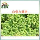 【綠藝家】F01.九層塔 (白骨羅勒)種...