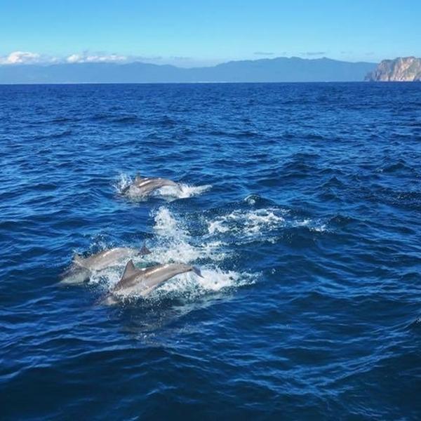 【宜蘭】噶瑪蘭號賞鯨+環龜山島+登島成人票