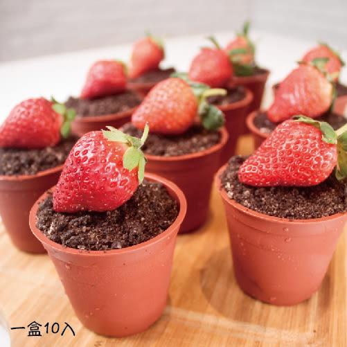 ◎季節限定◎【木匠手作】草莓盆栽 - 提拉米蘇 (一盒10入)
