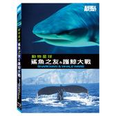 新動國際【動物星球頻道-鯊魚之友&護鯨大戰(藍光) SHARKMAN & WHALE WARS.BD】