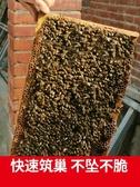 中蜂巢礎蜂具養蜂工具蜂巢巢框 cf
