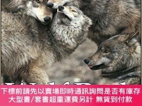 二手書博民逛書店Wolf罕見Pack: Tracking Wolves in the Wild (Discovery!)-狼群:在