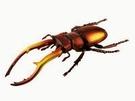 【4D Master】26571 立體拼組模型 昆蟲系列 印度鍬形蟲
