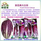 【綠藝家】大包裝B15.紫色舞大白菜15顆