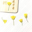 油菜花花朵,壓花押花材料滴膠,一包12朵