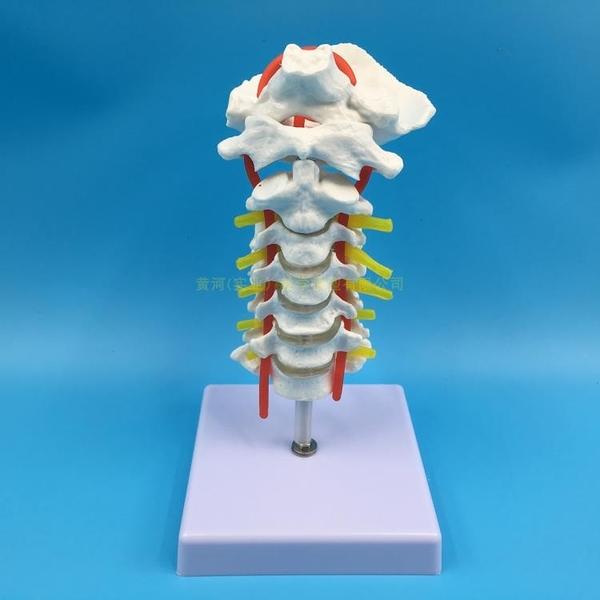 人體頸椎帶頸動脈后枕骨椎間盤與神經骨科模型 頸椎模型 關節模型