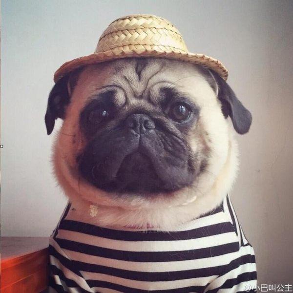 寵物頭飾 狗帽子 寵物狗草帽