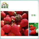【綠藝家】I05.草莓種子(阿里巴巴)2...