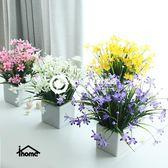清新蘭花小盆栽 家居裝飾品花
