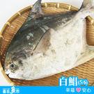 【台北魚市】  白鯧  550g±10%