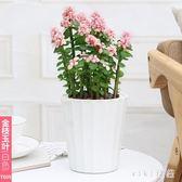 室內客廳桌面水培觀花綠植花盆四季常青花盆多肉植物花盆 nm5378【VIKI菈菈】