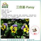【綠藝家】H46.三色堇種子50顆...