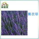 【綠藝家】K09.薰衣草種子50顆(狹葉)