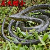 蛇玩具仿真兒童玩具蛇仿真蛇假軟蛇整蠱恐怖嚇人玩具動物模型【全館免運】