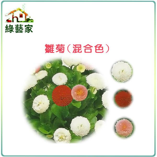 【綠藝家】大包裝H15.雛菊(混合色,高15~20cm)種子1千顆