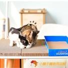 貓抓板盒裝雙面二塊平板瓦楞紙貓磨爪玩具貓咪【小獅子】