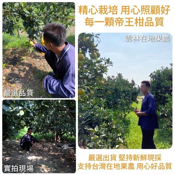 【果農直送-全省免運】雲林帝王柑X5台斤±10%含箱重/箱