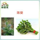 【綠藝家】A08.落葵種子120顆...