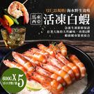 【屏聚美食】巨無霸馬來海水養殖活凍21/25生白蝦5盒(600G/15±3尾)免運