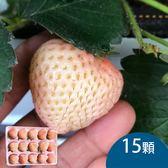 天藍果園-大湖白草莓(15顆)含運組