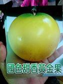 花花世界_季節果苗--國色甜香黃金果--(黃金蒟蒻)/4寸盆/40-50CM/TC