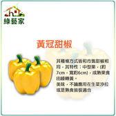 【綠藝家】G78.黃冠甜椒種子6顆