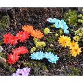 多色小花群多肉植物微景觀(單個) 小花【A030021】