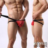 情趣睡衣VENUS 網紗條紋 男士雙丁 性感情趣 透明丁字褲 紅