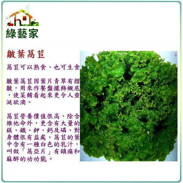 【綠藝家】A20.綠葉皺葉萵苣種子1500顆