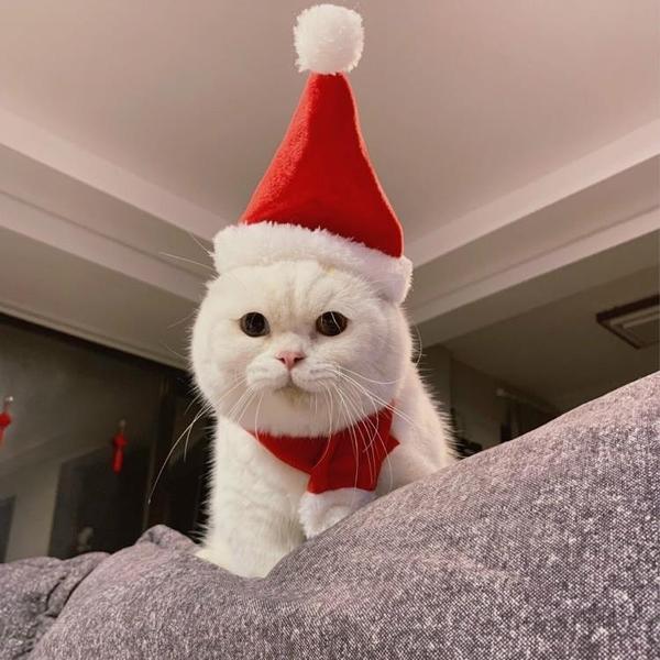全館83折 「喵幸」寵物頭套貓圣誕帽貓貓頭套貓咪頭飾裝扮圍巾圣誕節帽套裝