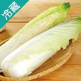 台灣天津白菜1顆(600g±10%/顆)【愛買冷藏】