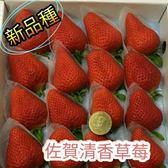 花花世界_水果苗--佐賀清香草莓 (新品) --香味濃甜度大/2.5吋盆/ 高8-12公分/TS