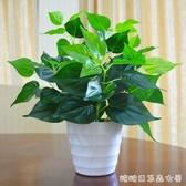 仿真植物-仿真綠蘿盆栽假植物室內外裝飾塑料小盆栽田園仿真花草假綠蘿擺設 糖糖日系