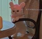 貓咪頭套寵物狗狗頭飾可愛