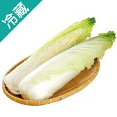 產銷履歷天津白菜1粒(700g±5%/粒)【愛買冷藏】