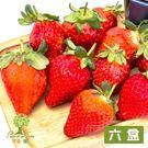 樂園樹.無農藥草莓鮮果600g/盒(共6盒)﹍愛食網