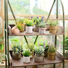 假花擺件-仿真多肉植物盆栽擺件可用於咖啡廳餐廳【全館88折免運】