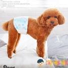 狗狗生理褲公泰迪寵物禮貌帶母狗姨媽衛生巾專用【淘嘟嘟】