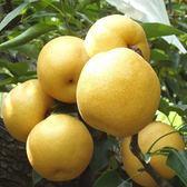 【綠安生活】大湖新興梨6粒2盒(460g±10%/粒)-清甜多汁