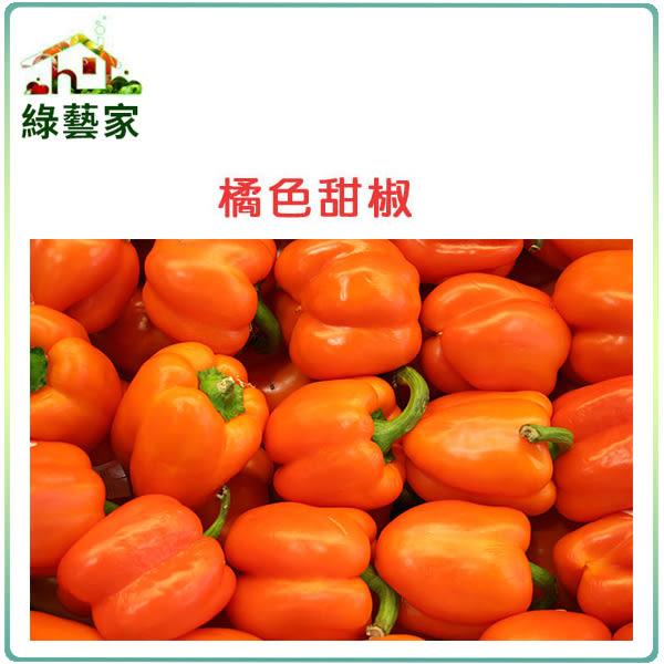 【綠藝家】大包裝G76.橘色甜椒種子60顆