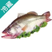 加州鱸魚1尾(300~400g/尾)【愛買冷藏】