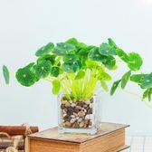 家居室內家居裝飾茶幾餐桌臥室辦公室擺件玻璃杯花瓶海棠綠植套裝【小梨雜貨鋪】