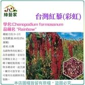 【綠藝家】大包裝00H49.台灣紅藜(彩虹)種子80克(約6萬顆)