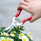 園藝剪刀 花剪園藝剪刀碳鋼花果剪花藝修枝剪 【618特惠】