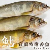 特選宜蘭公香魚(10尾) 1kg±10%/盒